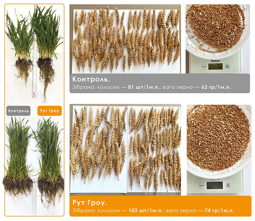 ефективність стимулятора росту рослин Рут Гроу