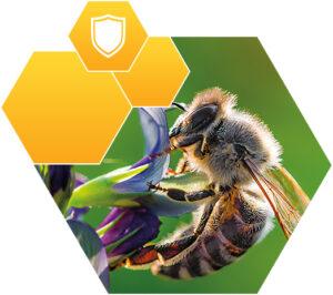 aplikacja-produktu-pszczola